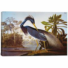 Icanvas Louisiana Heron From