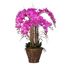 38 Inch Tall Orchid Arrangement In Fiberstone Pot