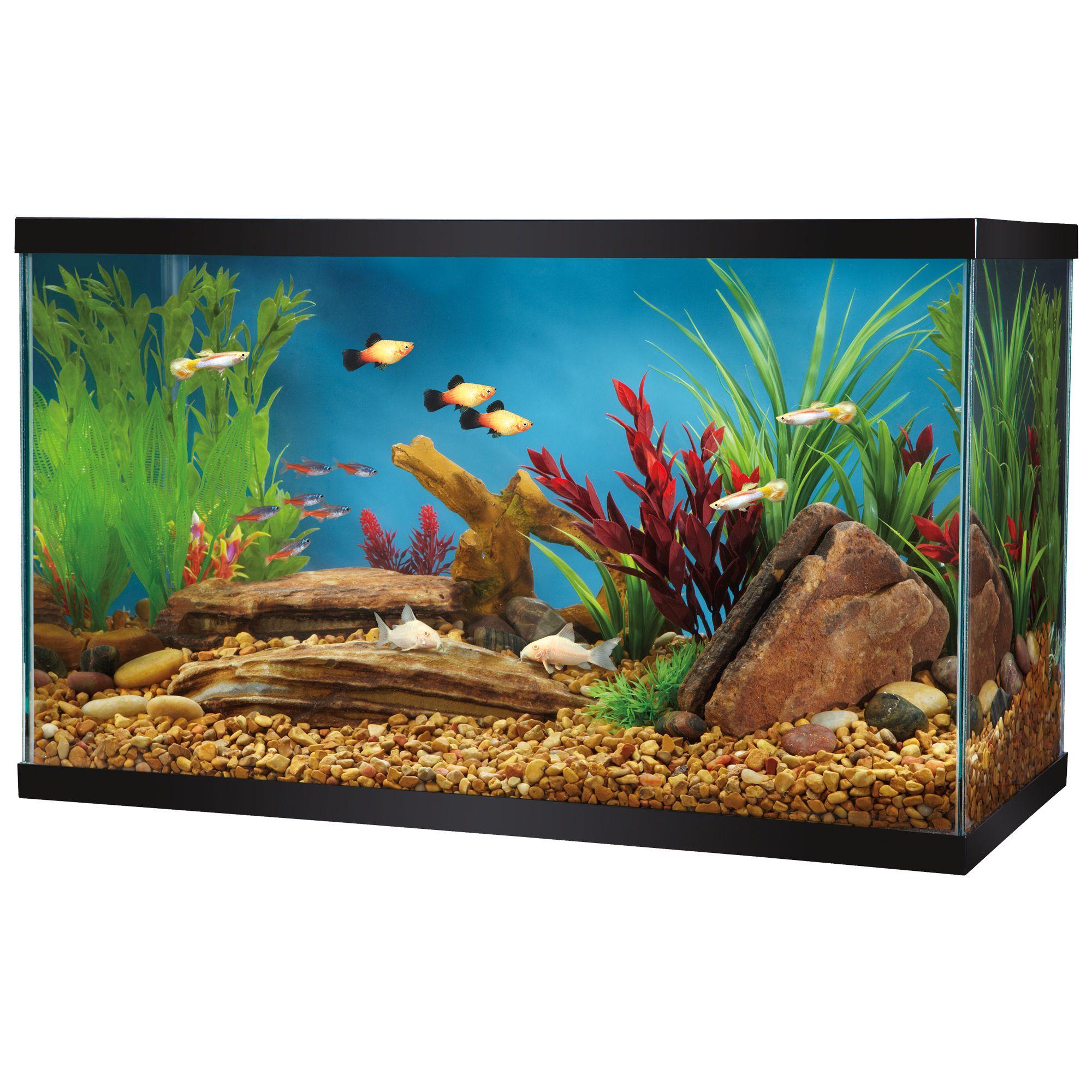 Glass aquarium usa for 10 gallon fish tank petsmart