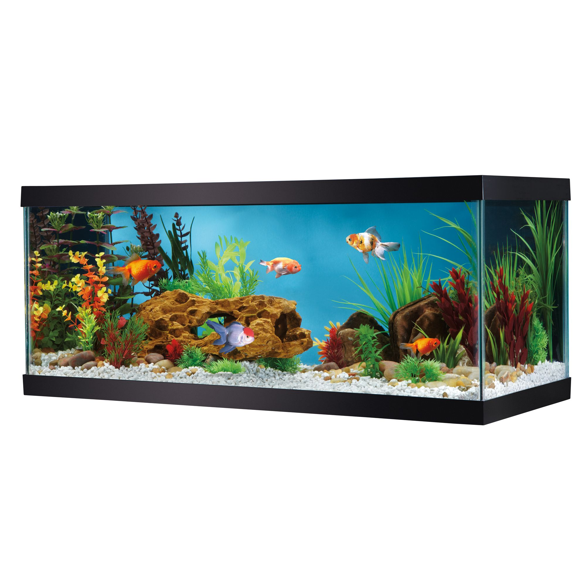 Glass aquarium usa for 20 gallon fish tank size