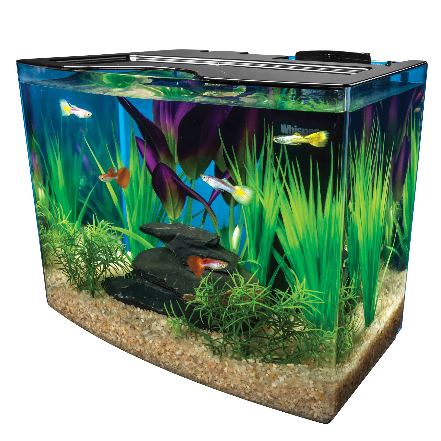 Marineland usa for Fish for 2 gallon tank