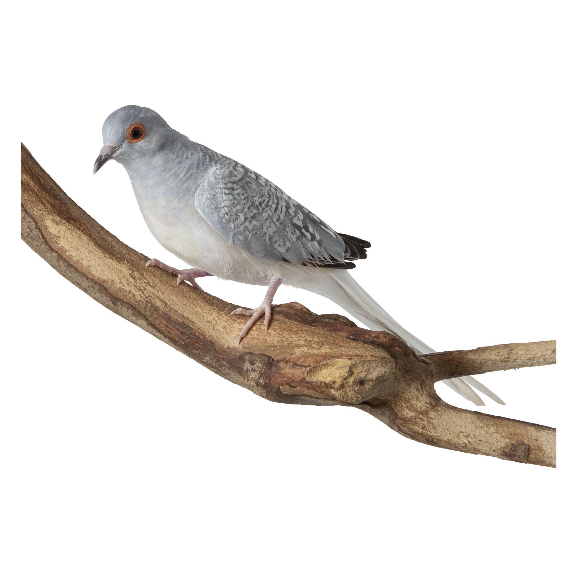 Diamond Dove 4041006