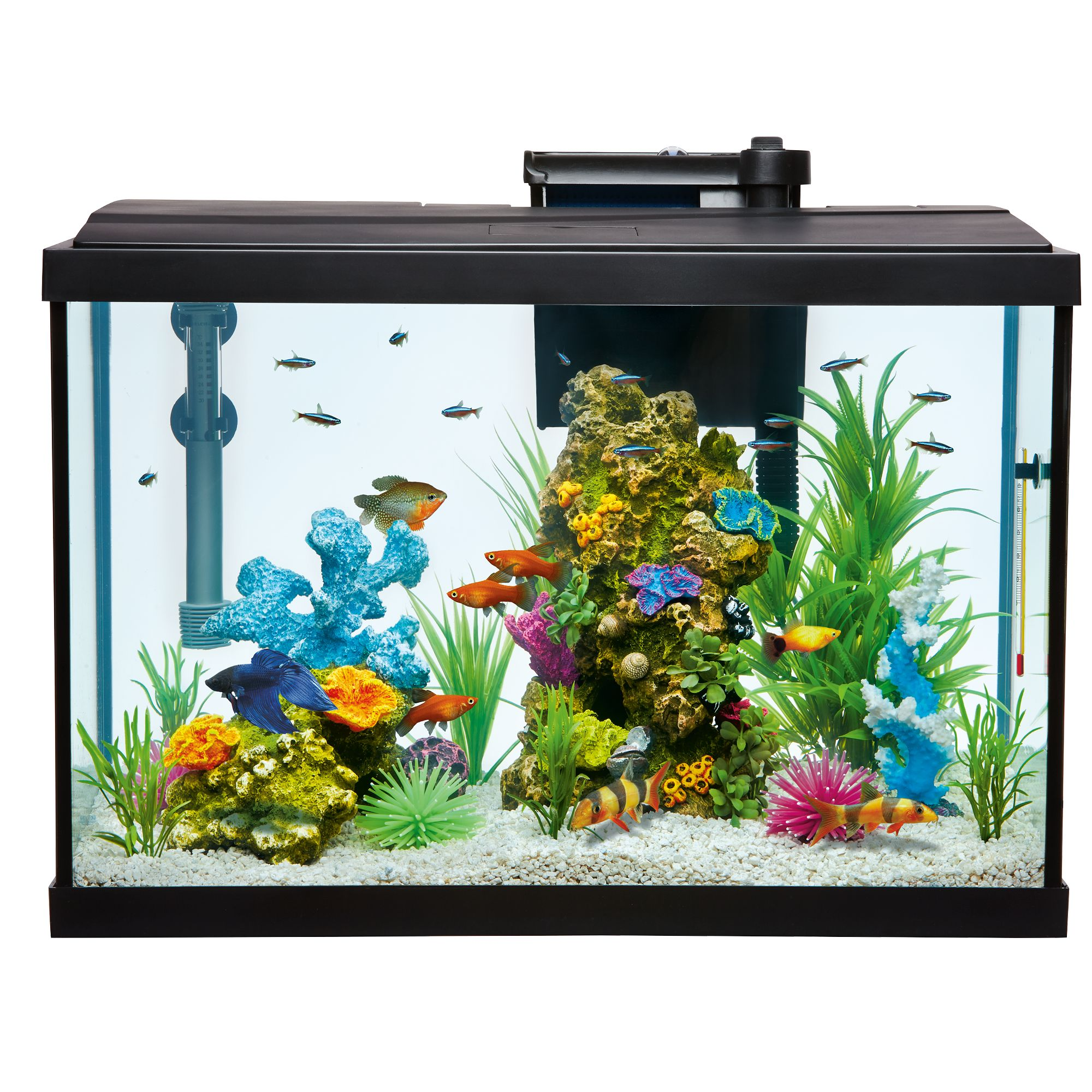 Gallon aquarium usa for 20 gallon fish tank size