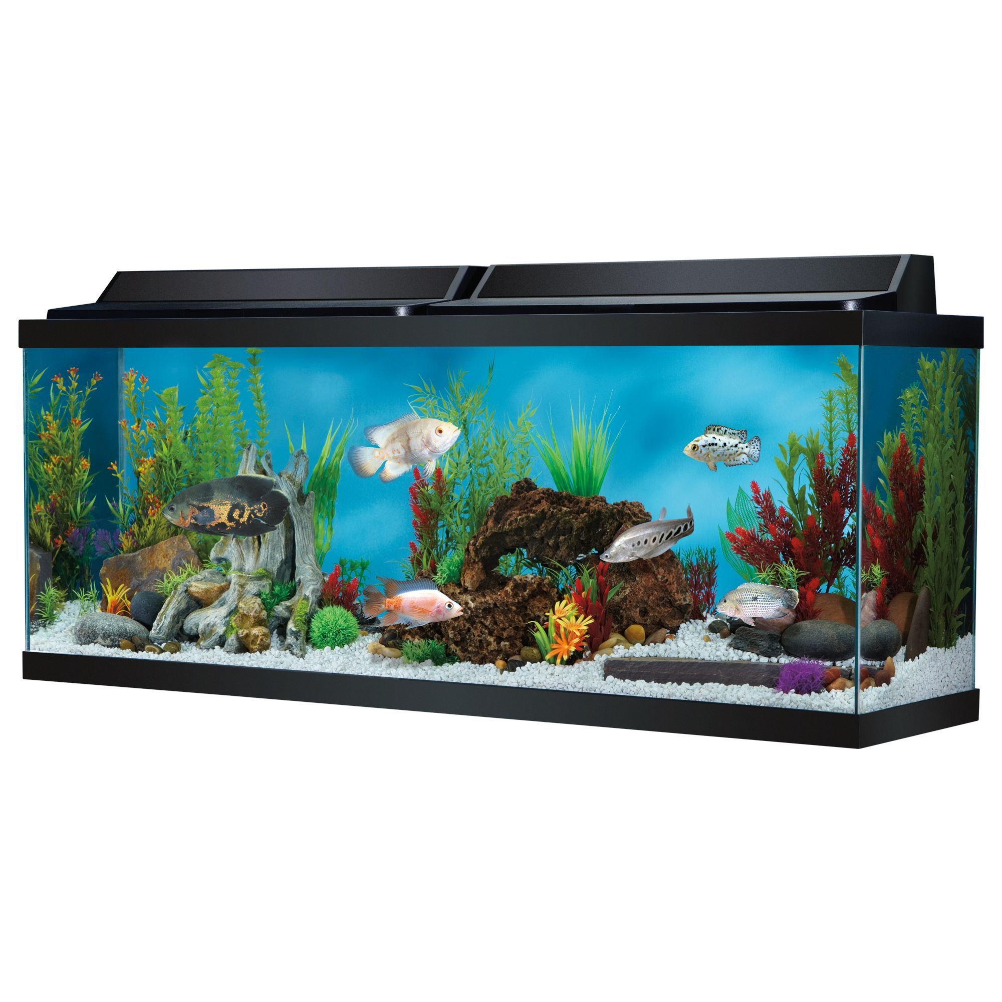 Top Fin 150 Gallon Aquarium