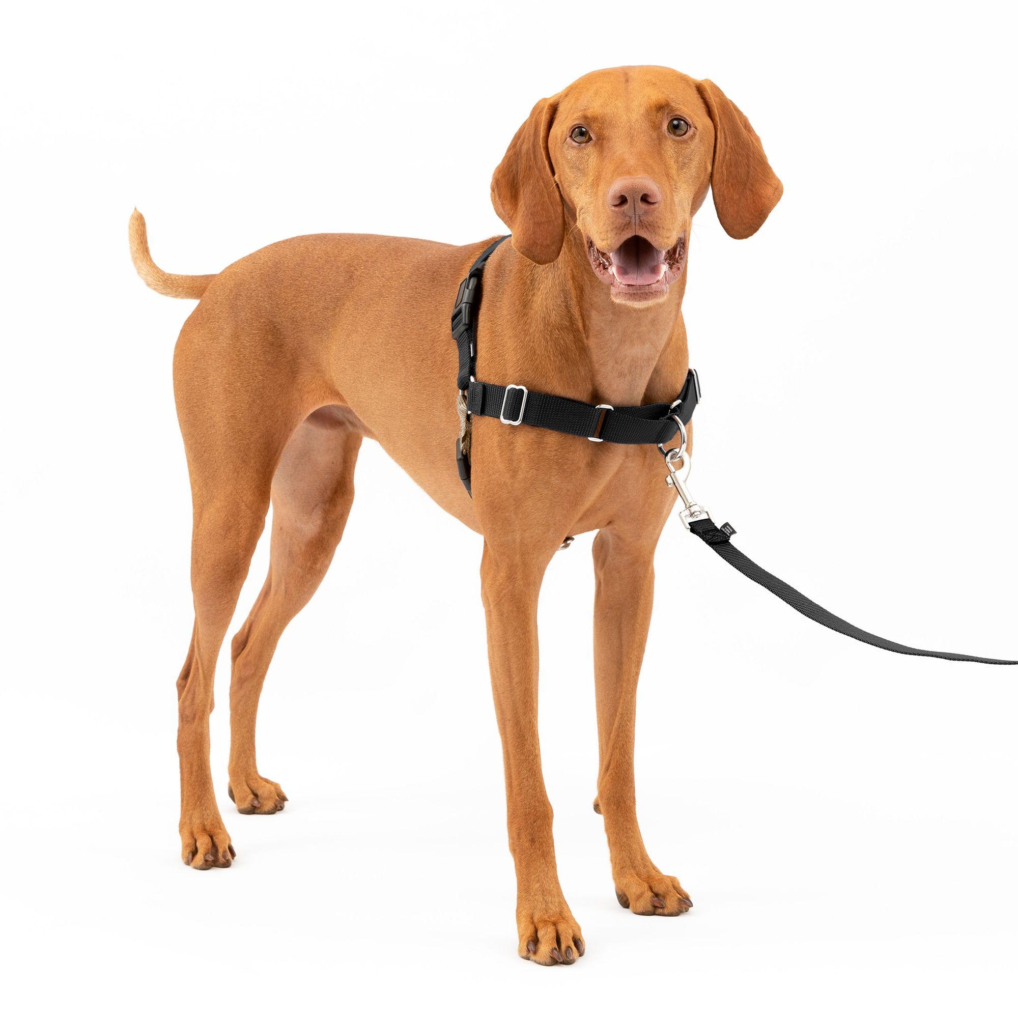 PetSafe Easy Walk Dog Harness size: Medium, Black