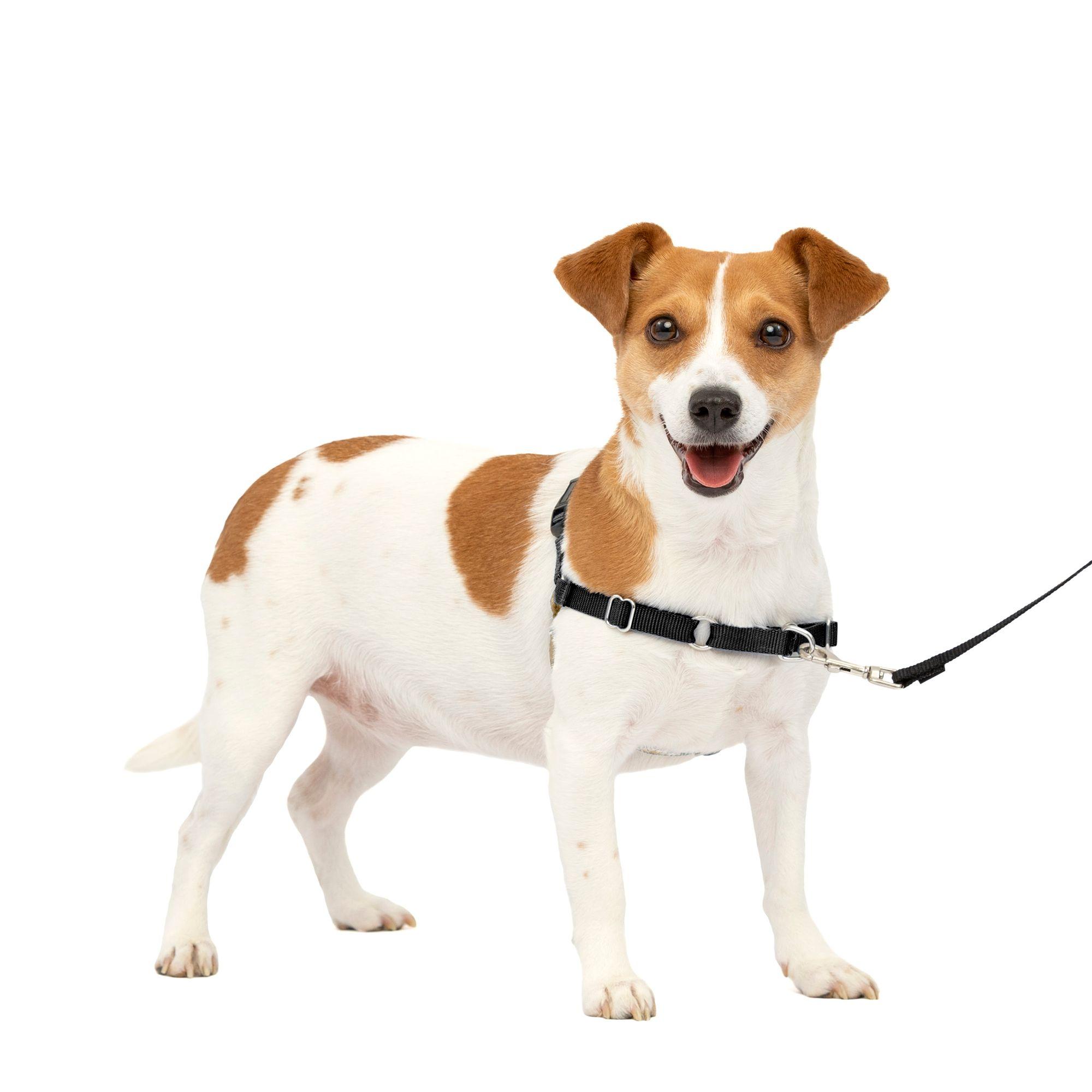 PetSafe Easy Walk Dog Harness size: Small, Black