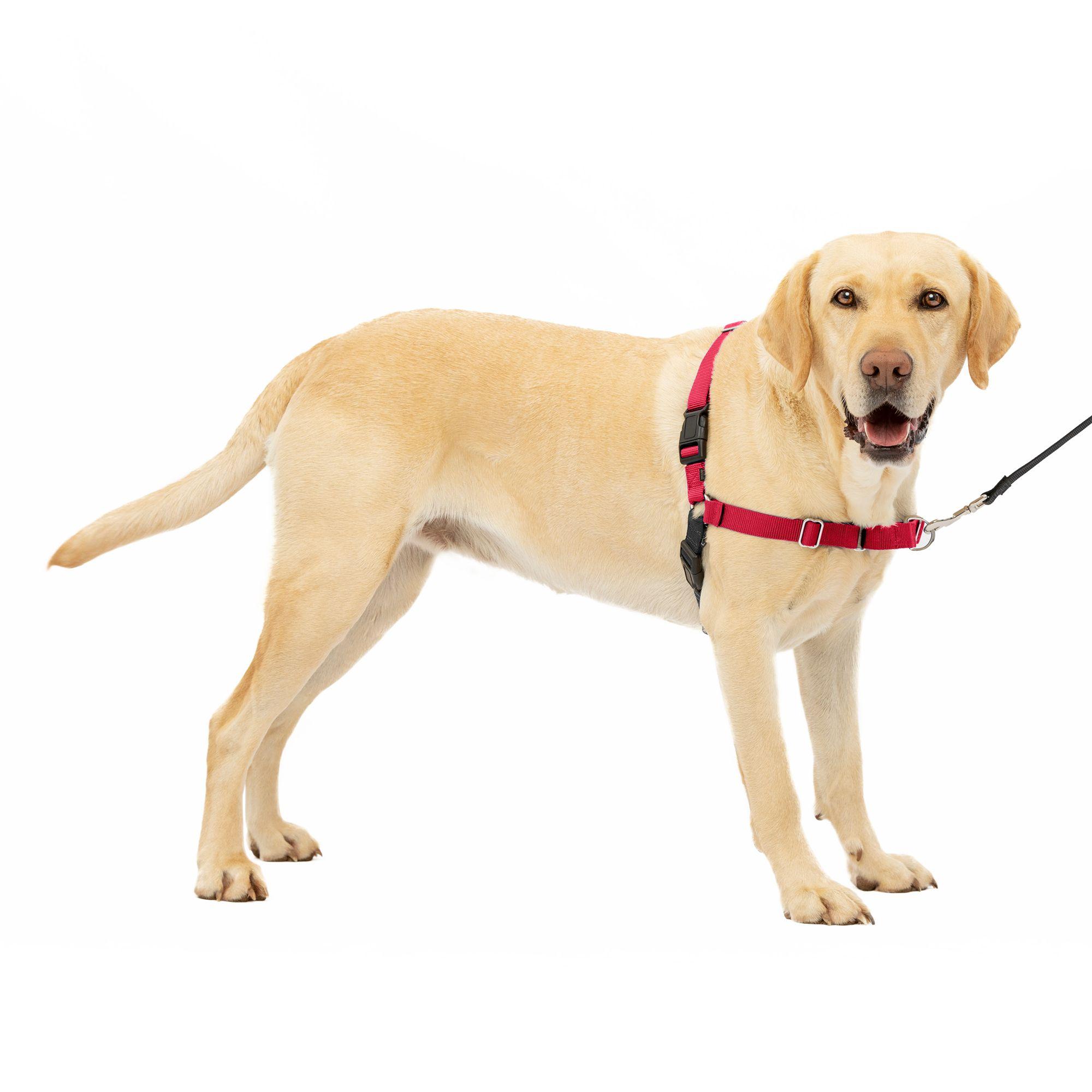 PetSafe Easy Walk Dog Harness size: Large, Red