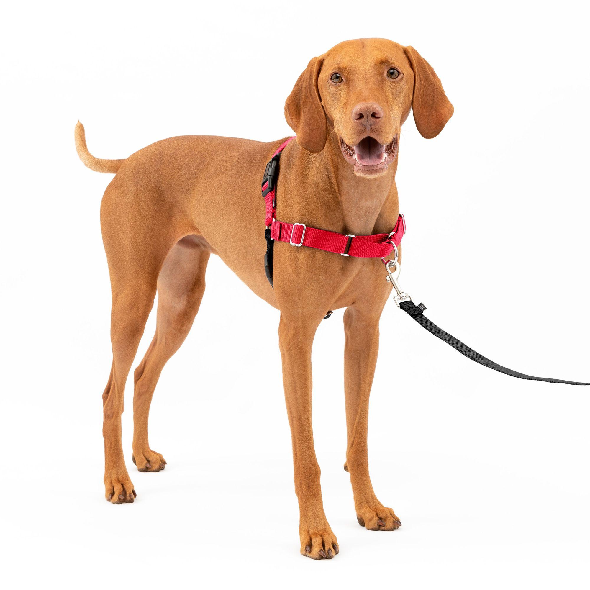 PetSafe Easy Walk Dog Harness size: Medium, Red