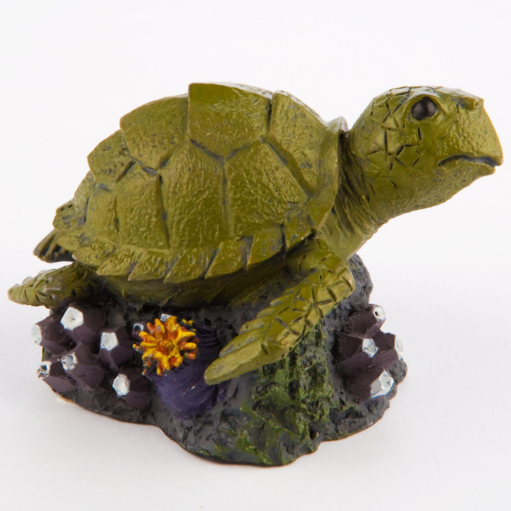 Turtle Aquarium - USA