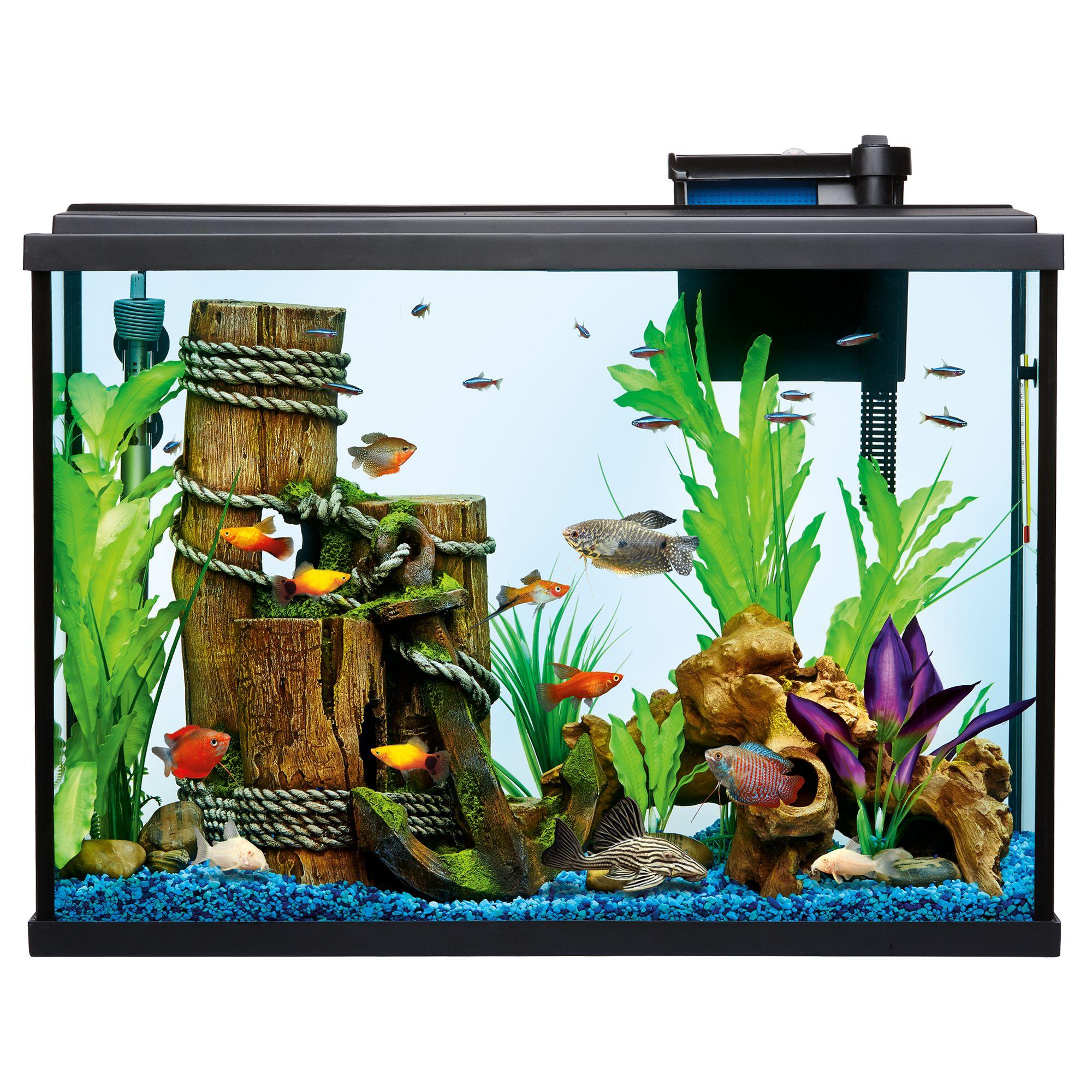 Gallon aquarium usa for 37 gallon fish tank