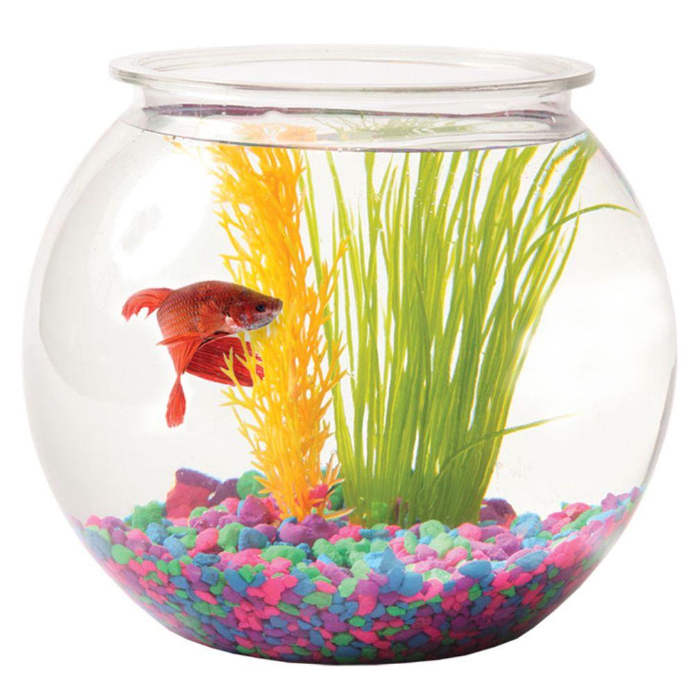 Grreat Choice 1 Gallon Fish Bowl Size 1 Gal