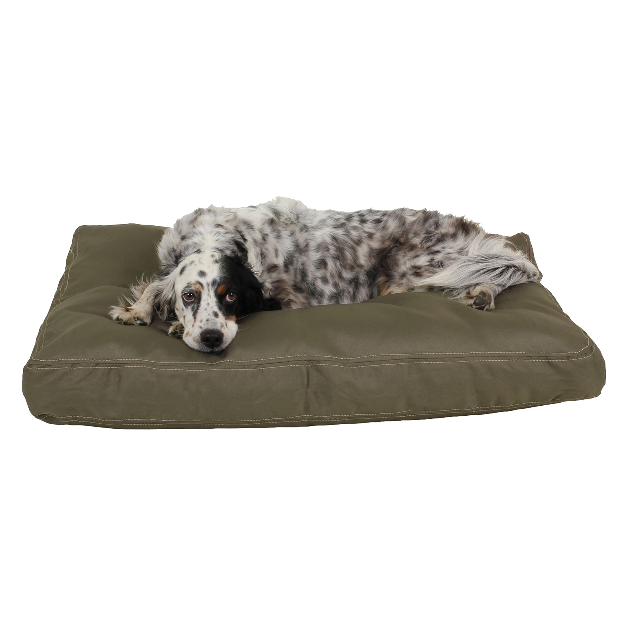 Carolina Pet Brutus Tough Personalized Pet Bed Size 36l X 27w X 4h Green