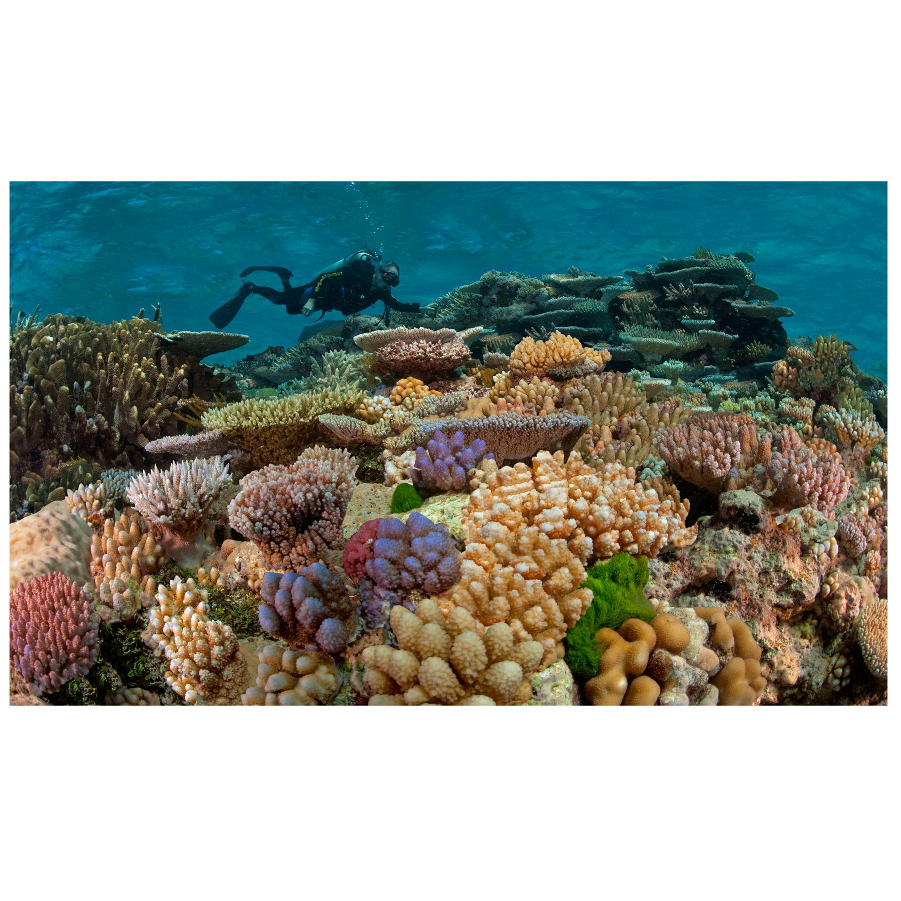 National Geographic 3 D Lenticular Coral Aquarium Background Size Small