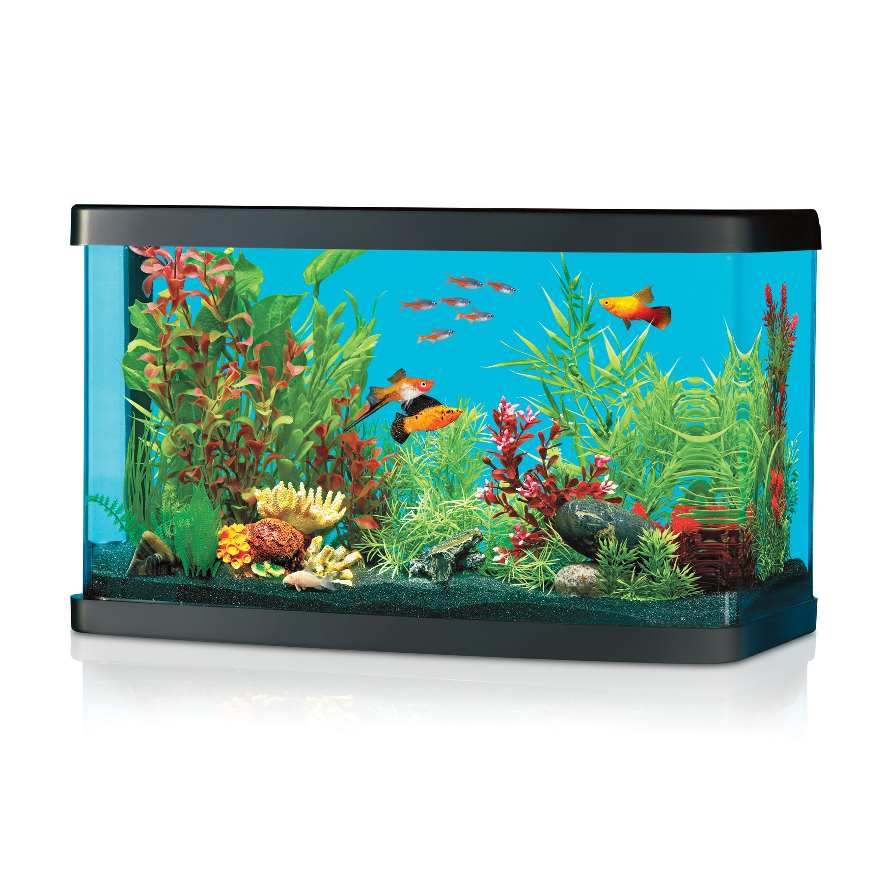 National Geographic, Aqua Oasis Starter Kit size: 8.5 Gal, Black & Clear 5210331