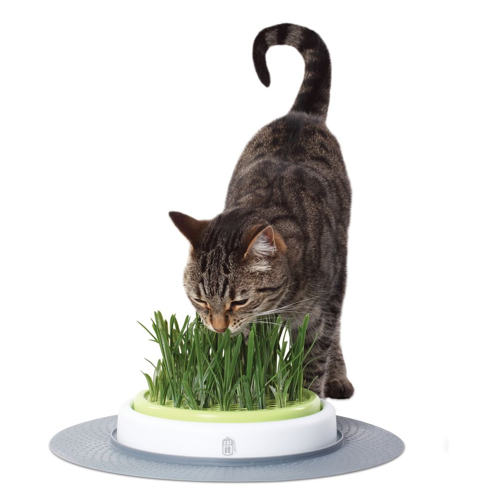 Catit Senses Cat Grass Garden Kit