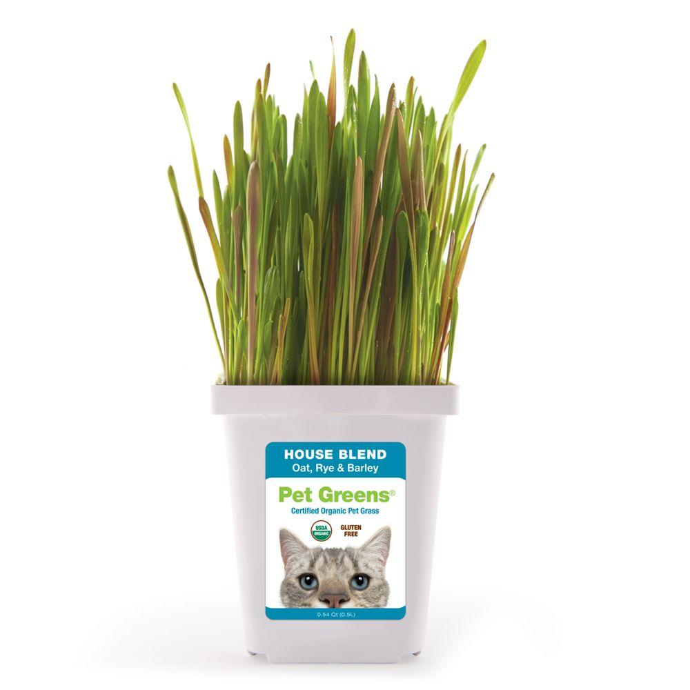 Pet Greens Grain Free Organic House Blend Cat Grass