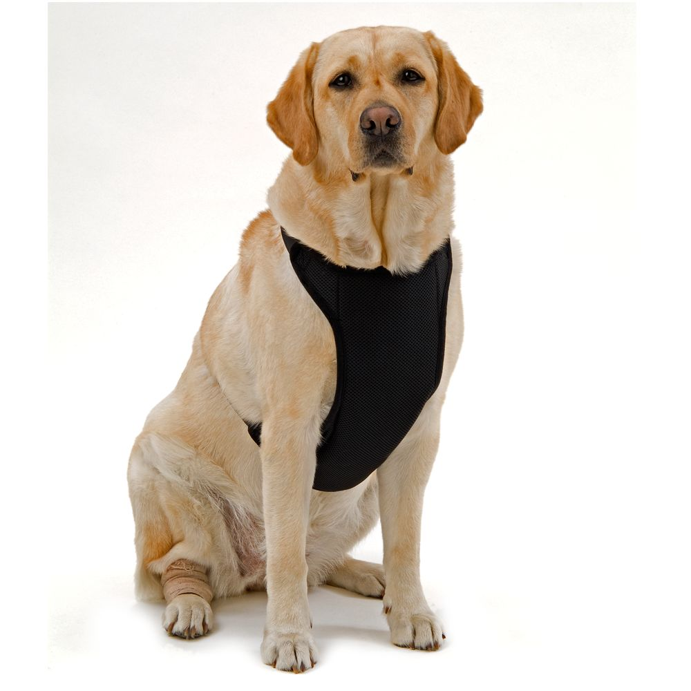 Kumfy Tailz Warming/cooling Dog Harness Size Large Black