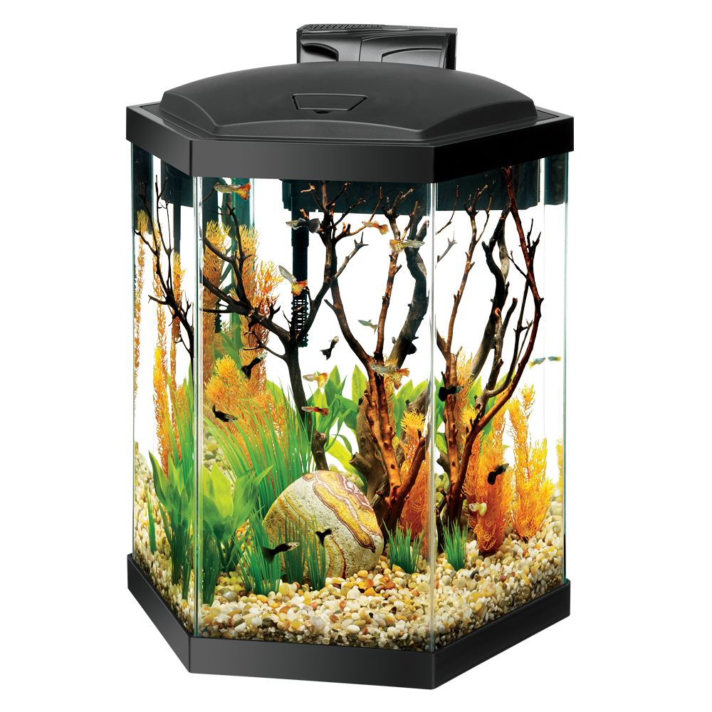 Aqueon 20 Gallon Hex Aquarium Starter Kit size: 20 Gal 5229838