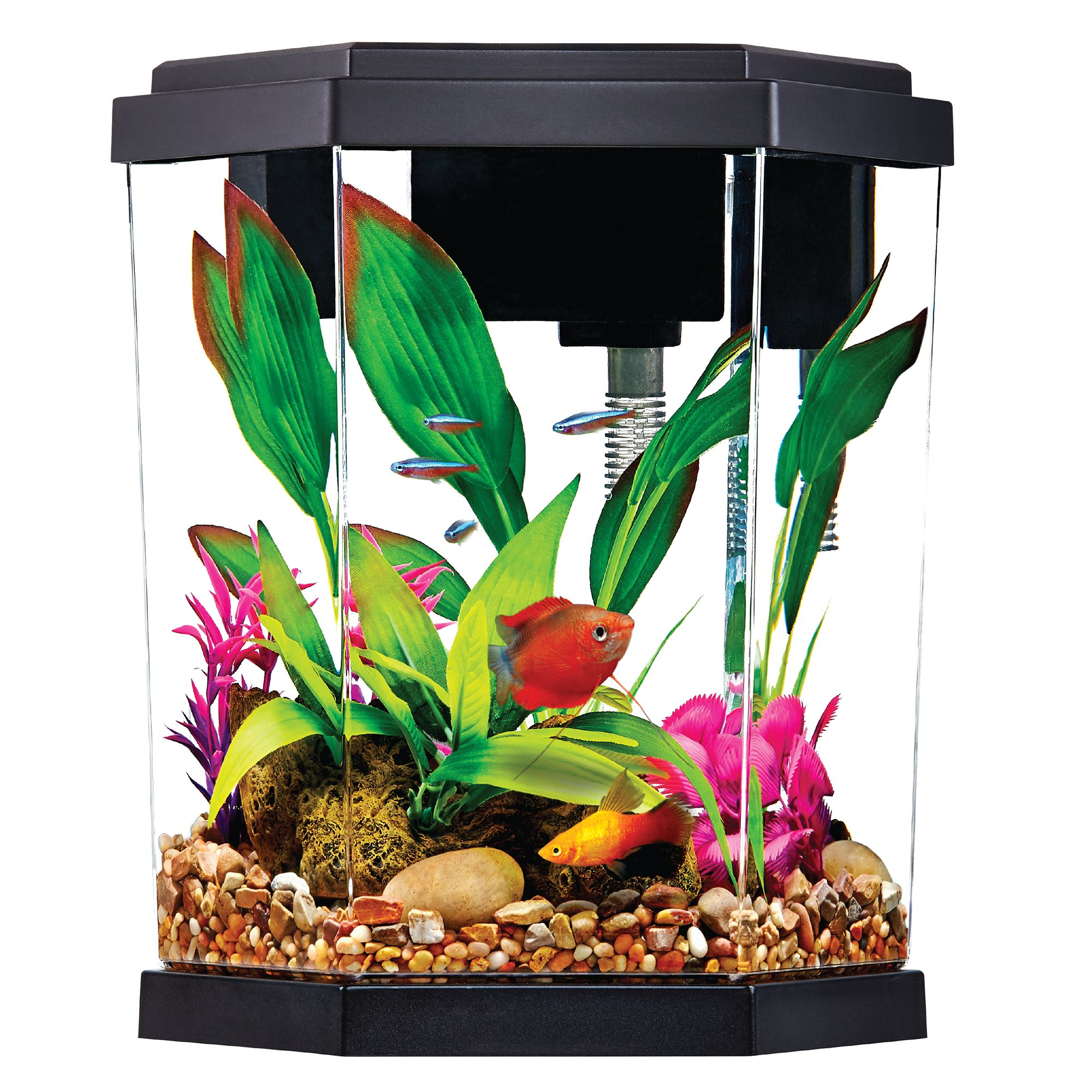 Top Fin 2 Gallon Intrigue Aquarium Kit Size 2 Gal