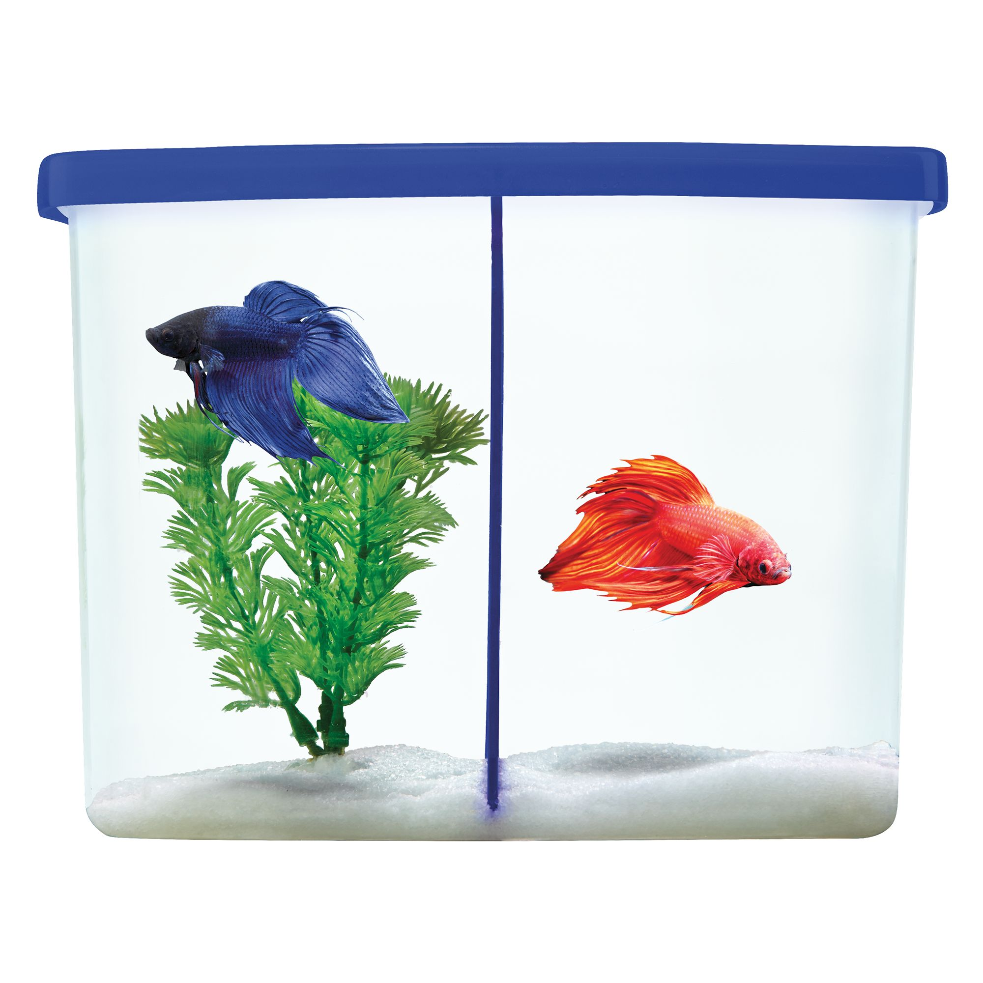 Top fin twinsies betta tank blue for Petsmart betta fish price