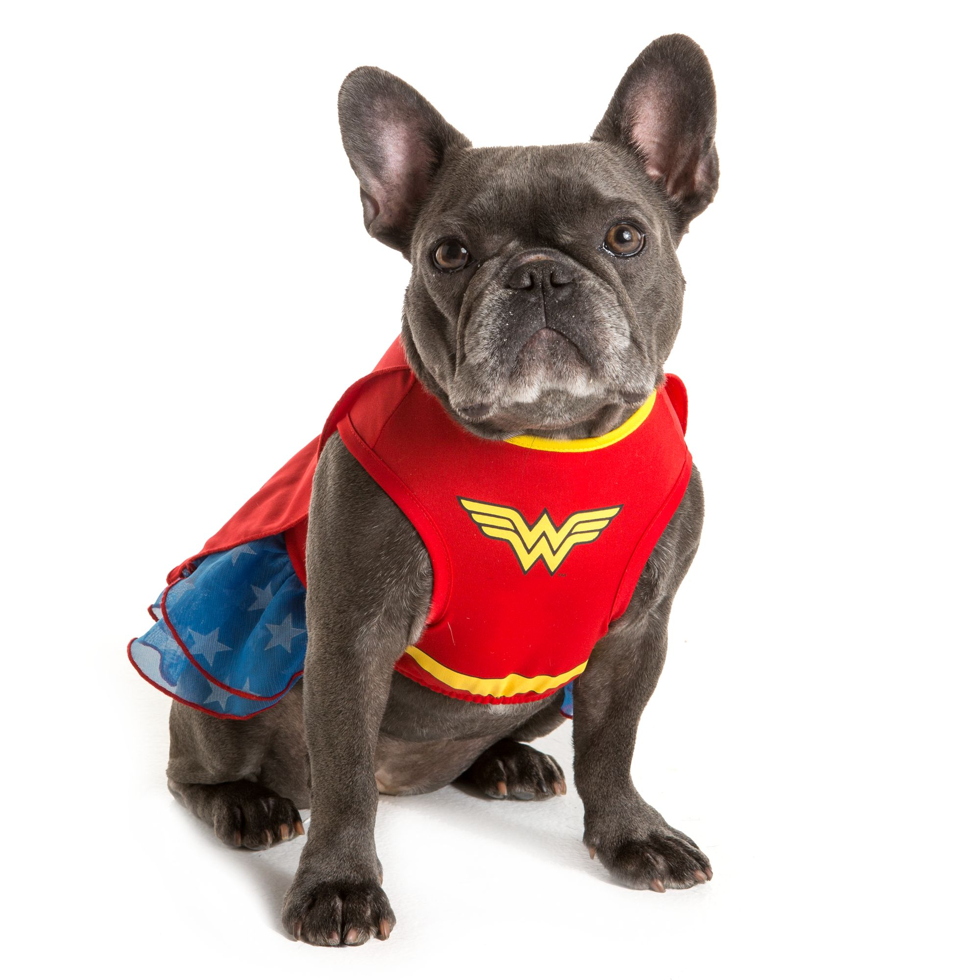 Wonder Woman Pet Costume for Halloween  #pets #halloween #dogcostume