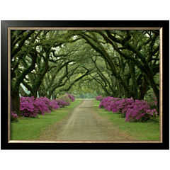 Art.com A Beautiful Pathway Framed Photo Wall Art