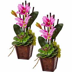 Cattleya Orchid And Succulent Arrangement 2-pc. Floral Arrangement