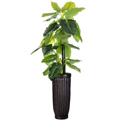 Laura Ashley 93 Inch Tall Indoor/Outdoor ElephantEar Plant In Cylinder Fiberstone Planter