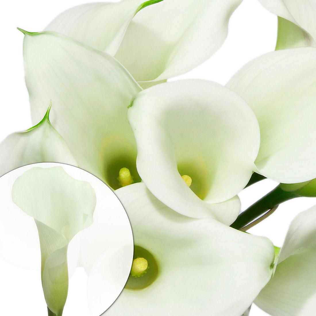 Mini Calla Lilies 100 Ct White Bjs Wholesale Club