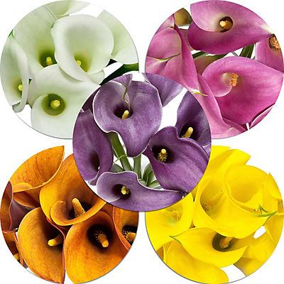 Mini Calla Lilies, 100 ct. - Assorted