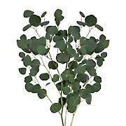 InBloom Silver Dollar Eucalyptus, 40 Stems