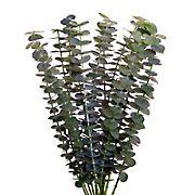 InBloom Baby Blue Eucalyptus, 100 Stems