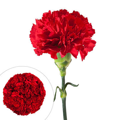 InBloom Carnations, 100 Stems - Red