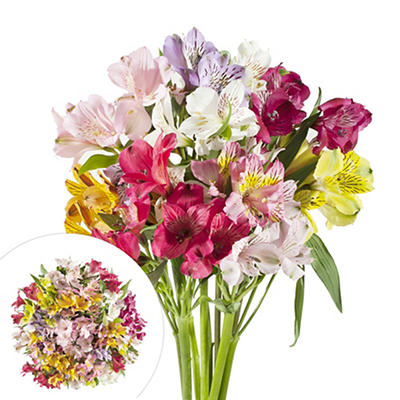 InBloom Alstroemeria, 120 Stems - Assorted