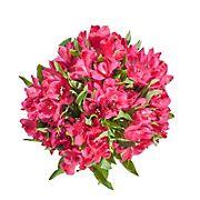 InBloom Alstroemeria, 120 Stems - Hot Pink