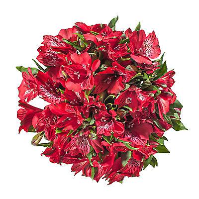 InBloom Alstroemeria, 120 Stems - Red