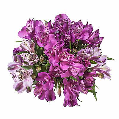 InBloom Alstroemeria, 120 Stems - Purple