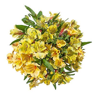 InBloom Alstroemeria, 120 Stems - Yellow