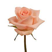 Rainforest Alliance Certified Roses, 50 Stems - Peach