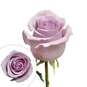 Rainforest Alliance Certified Roses, 50 Stems - Lavender