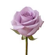 Rainforest Alliance Certified Roses, 50 Stems - Lavender