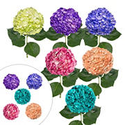 Hand-Painted Hydrangeas, 26 Stems - Novelty Assorted