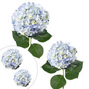 Hydrangea Jumbo and Regular Stem Combo Pack, 20 ct. - Blue