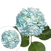 Hand-Painted Hydrangeas, 26 Stems - Light Blue