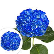 Hand-Painted Hydrangeas, 26 Stems - Dark Blue
