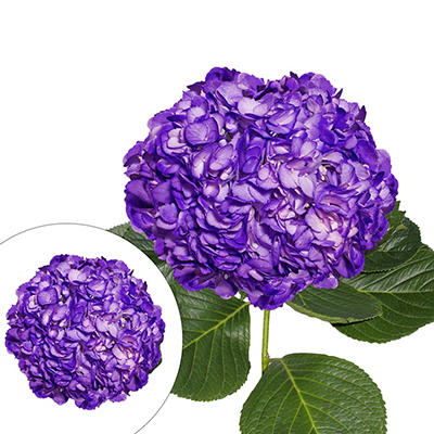 Hand-Painted Hydrangeas, 26 Stems - Dark Purple