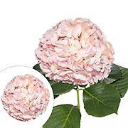 Hand-Painted Hydrangeas, 26 Stems - Light Pink