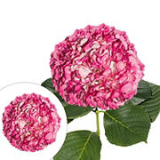 Hand-Painted Hydrangeas, 26 Stems - Magenta