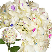 Hand-Painted Hydrangeas, 26 Stems - Party