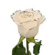 White Glitter Rose, 100 ct. - Silver